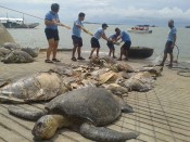 Illegal Hunting of Endangered Sea Turtles by Chinese fisherman on Philippine waters.