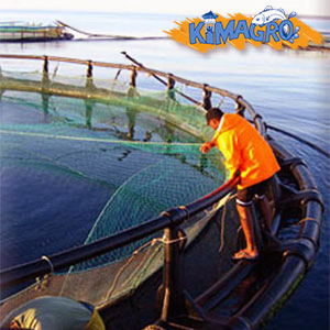 Kimagro employee adjusts fish nets on a floating fish cage